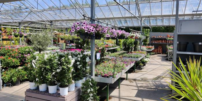 Planten, voor binnen en buiten